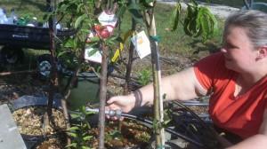 Sarah watering fruit trees